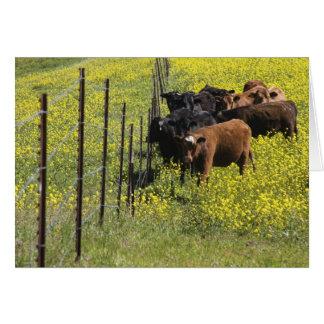 Fenceline Cattle Card