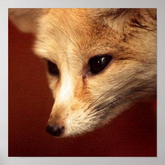 Fennec Fox Poster