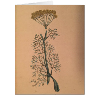 Fennel Card