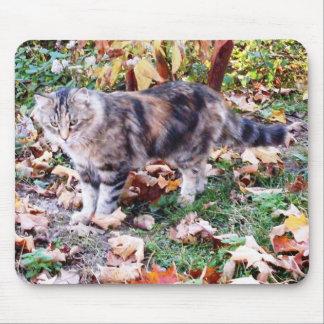 Feral Cat in Autumn Mousepad