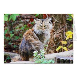 Feral Cat Sitting in Woods Card