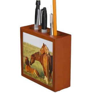 Feral Horse Equus caballus) adult smelling Desk Organizer