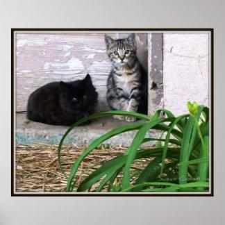 Feral Kittens Poster