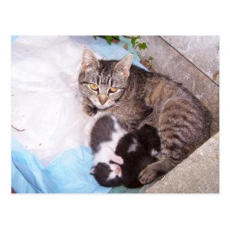 Feral mom postcard