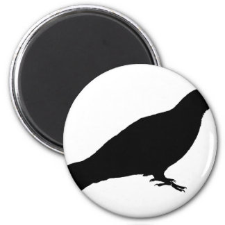 Feral Pigeon Magnet