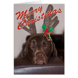 Fermez-vous de Labrador avec la photographie Carte De Vœux