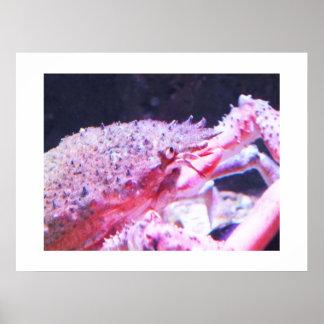 Fermez-vous d'une araignée de mer poster