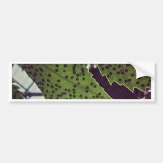 fern bumper sticker