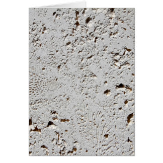 Fern Fossil Tile Surface Closeup Card