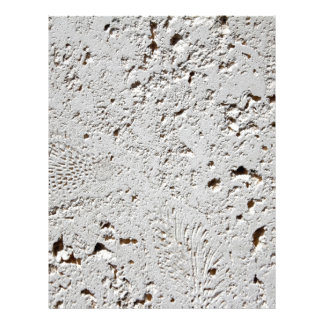 Fern Fossil Tile Surface Closeup Letterhead