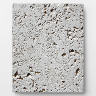 Fern Fossil Tile Surface Closeup Plaque