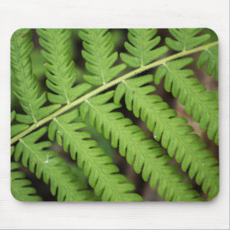 Fern Frond Mouse Pad