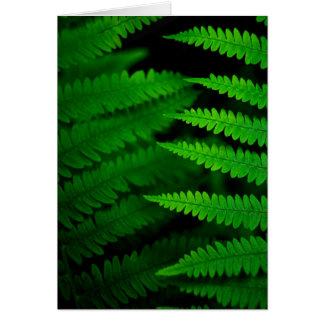 Fern Fronds Card