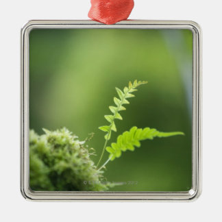 fern in rain forest clsoe up metal ornament