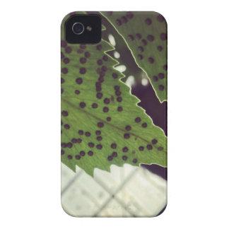 fern iPhone 4 covers