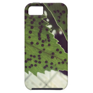 fern iPhone 5 covers