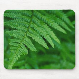 Fern leaf close-up mouse pad