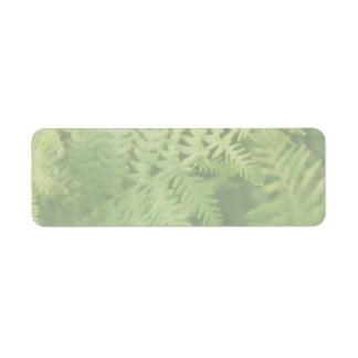 Fern Leaves, Light Green. Return Address Label