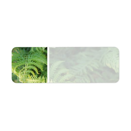 Fern Leaves. Return Address Label