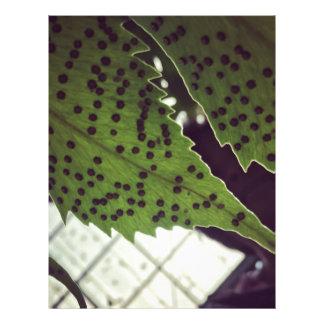 fern letterhead
