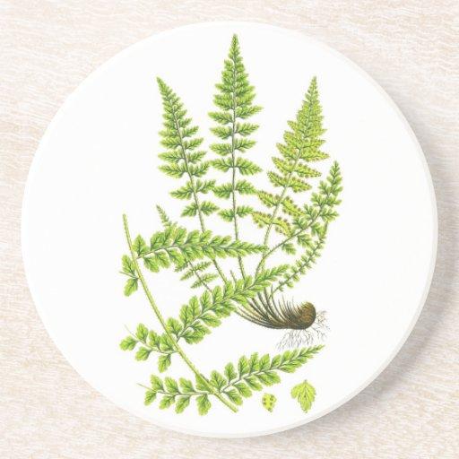 Fern No 6 Green Fern Plant Tropical Decor Beverage Coaster