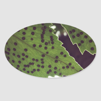 fern oval sticker