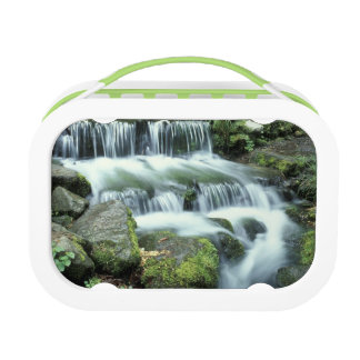 Fern Spring, Yosemite National Park Lunch Boxes