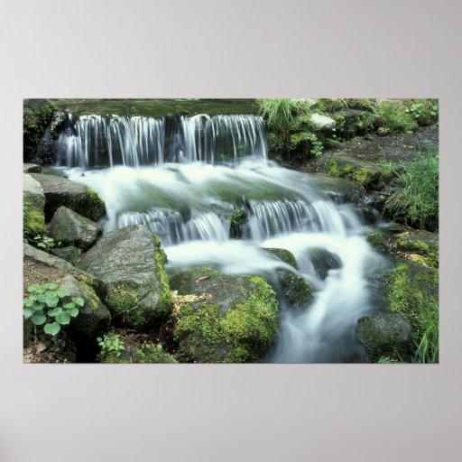 Fern Spring, Yosemite National Park Print