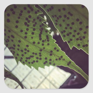 fern square sticker