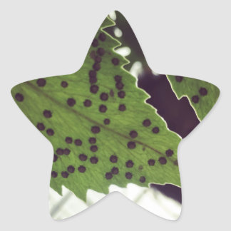 fern star sticker