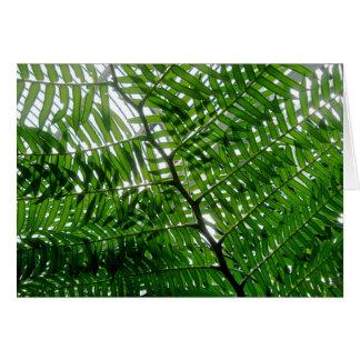 Fern Tree Note Card
