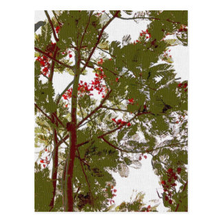 Fern Tree Red Flowers and Brown Branches Canvas Postcard