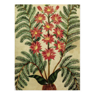 Fern with red and yellow flowers postcard