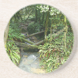 Fern Woods Forest Leaves Oregon Scenic Photography Drink Coaster