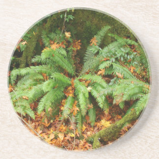 Fern Woods Forest Leaves Oregon Scenic Photography Drink Coasters