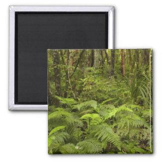 Ferns and native bush near Matai Falls, Catlins Square Magnet