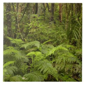 Ferns and native bush near Matai Falls, Catlins Tiles