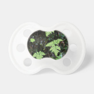Ferns - baby pacifier