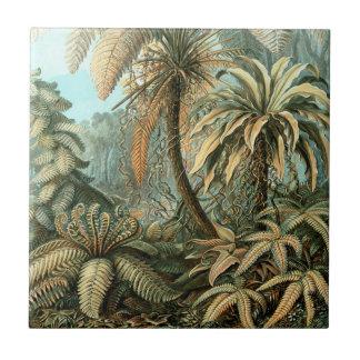 Ferns, Filicinae by Ernst Haeckel, Vintage Plants Tiles