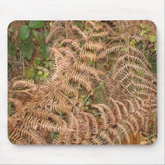 Ferns in Autumn Mouse Pad