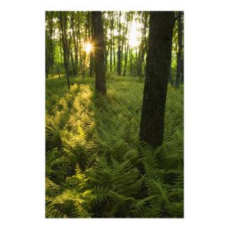 Ferns in the forest in Grafton, Massachusetts. Photo Art