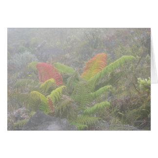 Ferns in the Mist - Haleakala, Maui Card