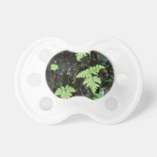 Ferns - pacifier