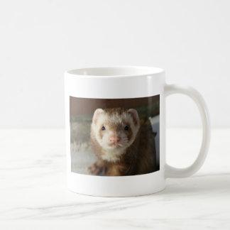 Ferret close-up mug