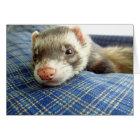 Ferret Face Birthday Card