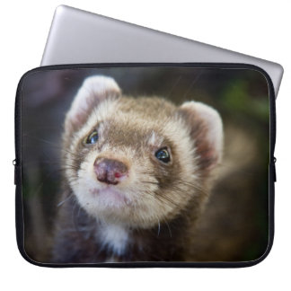 Ferret Laptop Sleeves