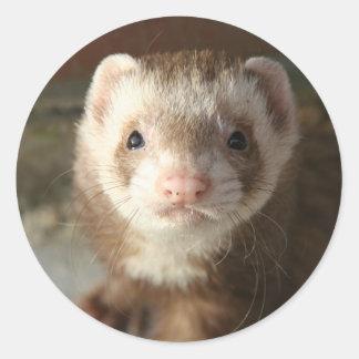 Ferret Sticker close-up