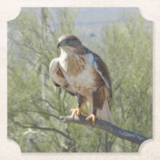 Ferruginous Hawk Paper Coaster
