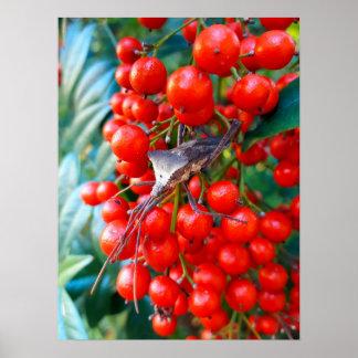 Festive Stink Bug Poster