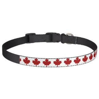 Feuille d'érable du Canada en rouge Colliers De Chiens